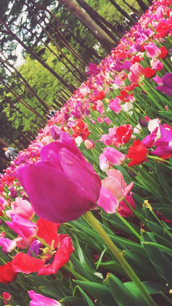 みんながにこにこの春になりますようにpage-visual みんながにこにこの春になりますようにビジュアル